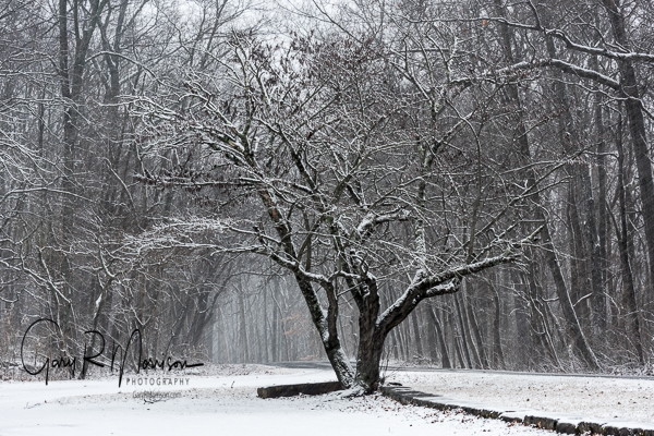 A Snowy Day In Brown County SP