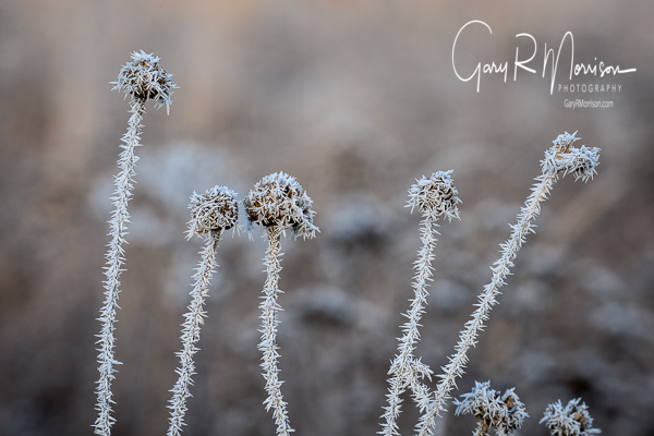 Hoar Frost Brown County SP IN