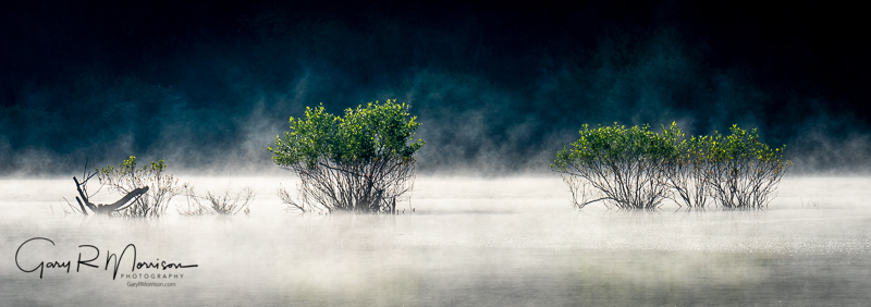 Bushes In Lake With Fog