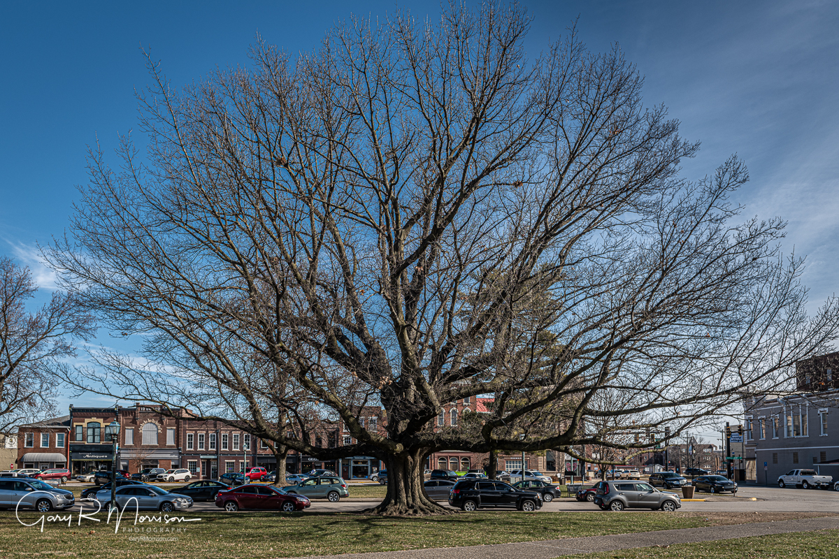 Patrick Henry Square Northern Red Oak