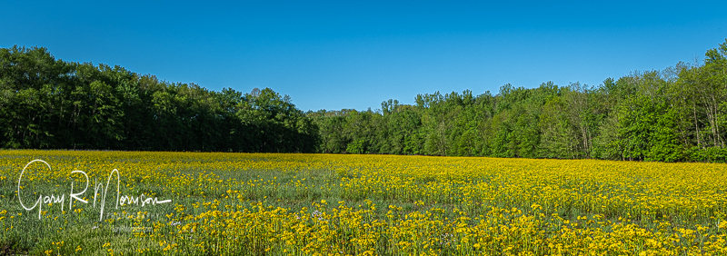 Spring field Monroe County IN