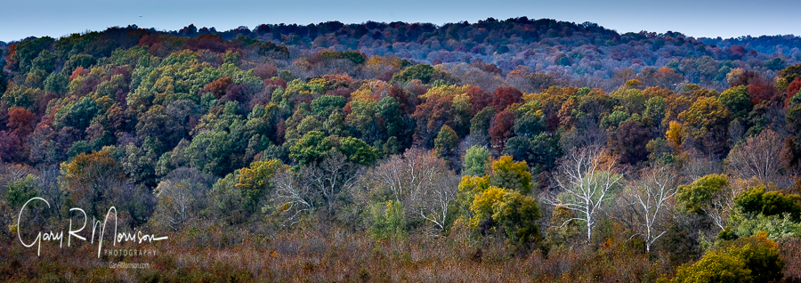 Sycamores Against Fall Colors Martin County IN