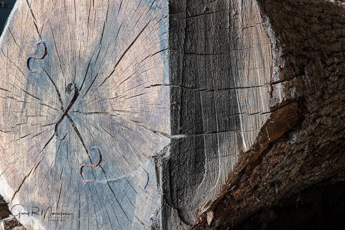 White Oak Log Drying with S-Hooks