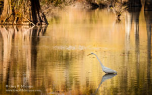 Egret at Stumpu Lake