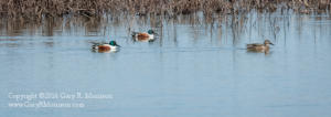 Northern Spooners Goose Pond FWA Green County IN