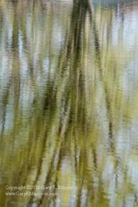 Tree Meditation III Medlock Pond Indiana