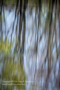 Tree Meditation II Medlock Pond Indiana
