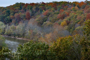 Fall color on the East Fork of the White RIver Martin County IN