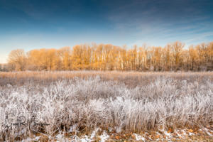 Prairie field with hoar frost Brown County SP IN