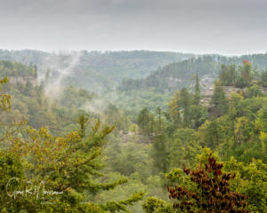 Fog rising over Red River Gorge KY