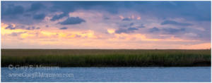 Salt Marsh, Eastern Shore of Virginia National Wildlife Refuge
