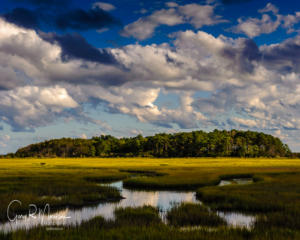 Salt marsh at Eastern Shore of Virginia National Wildlife Refuge