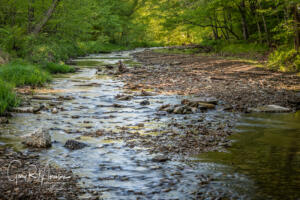 After a rain at Tanner Creek Brown County SP IN