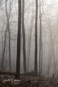 Fog in the Forest Spring Mill State Park Lawrence County IN