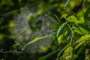 Spider Web Bluffs of Beaver Bend Martin County Indiana